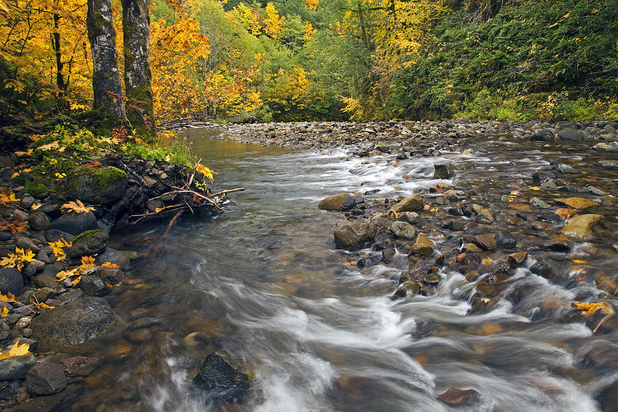 Fall Photograph - Autumn Meander by Mike  Dawson