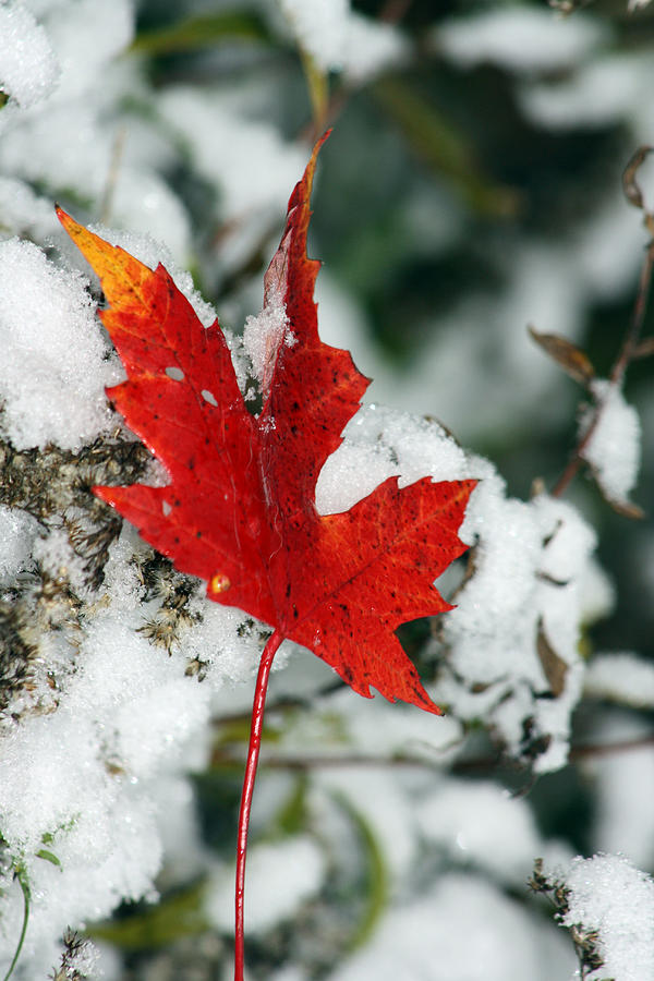 Autumn Photograph - Autumn Meets Winter by Cathy Beharriell