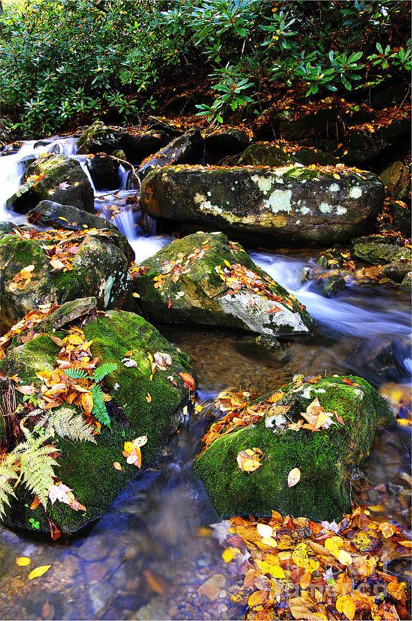 Fall Color Photograph - Autumn Monongahela National Forest by Thomas R Fletcher