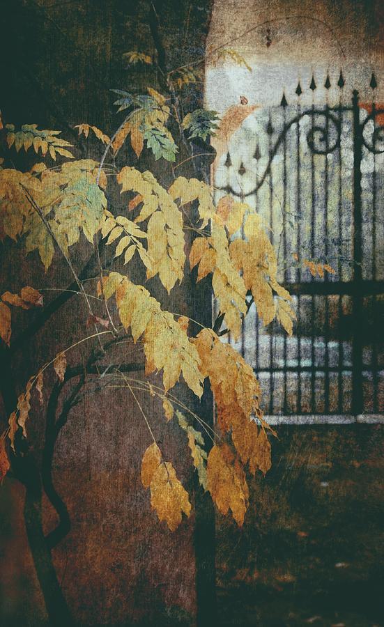 Autumn Mood by Vittorio Chiampan