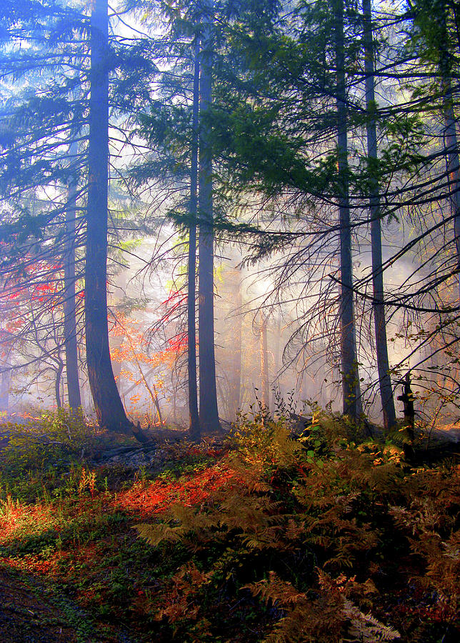 Fall Photograph - Autumn Morning Fire And Mist by Diane Schuster