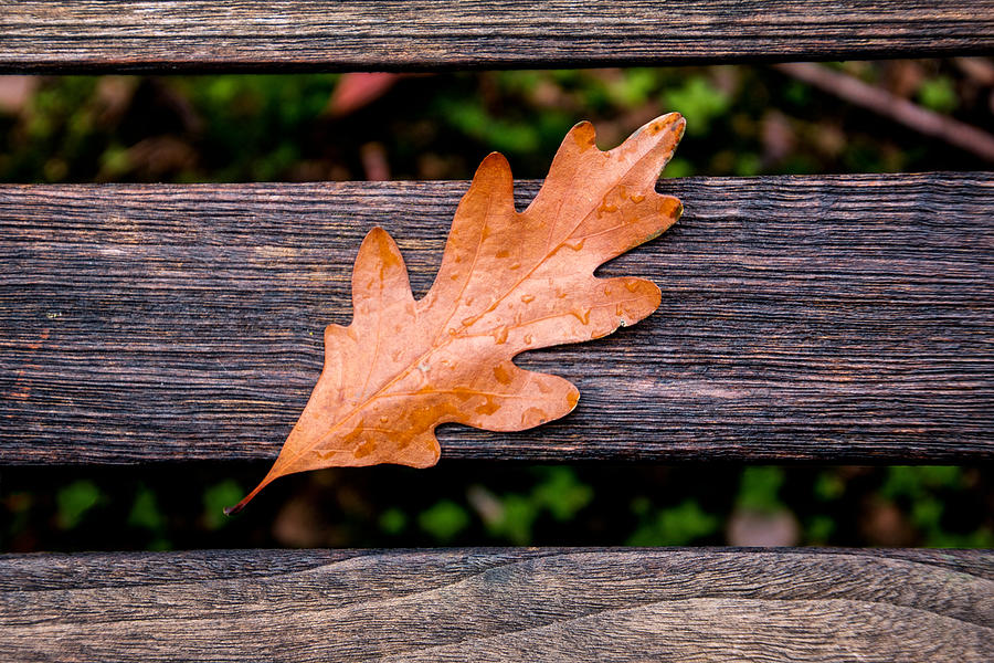 Holden Photograph - Autumn Oakleaf on Bench by Tom Mc Nemar