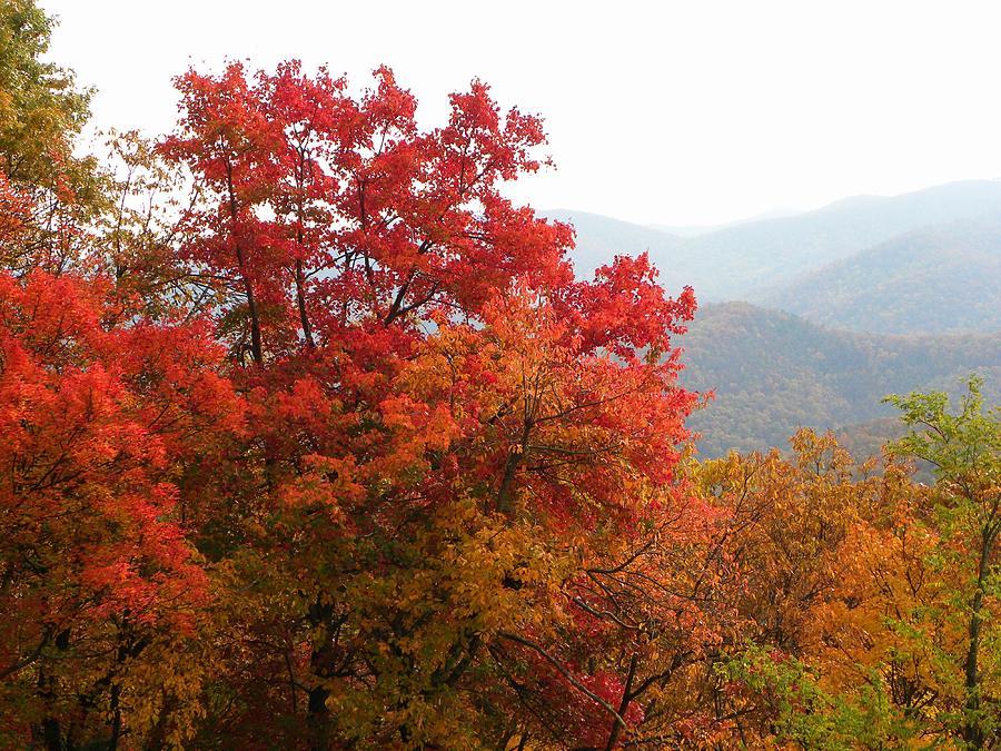 Autumn Photograph - Autumn On The Blueridge by Cindy Gacha