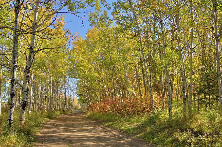 Autumn on the trail by Jim Sauchyn