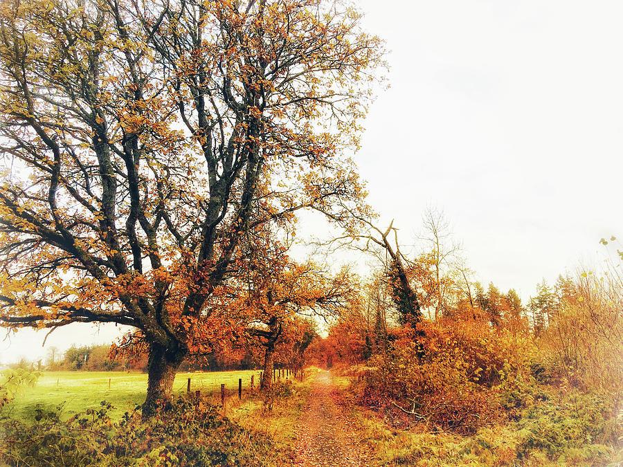 Autumn Photograph - Autumn On White by No Alphabet