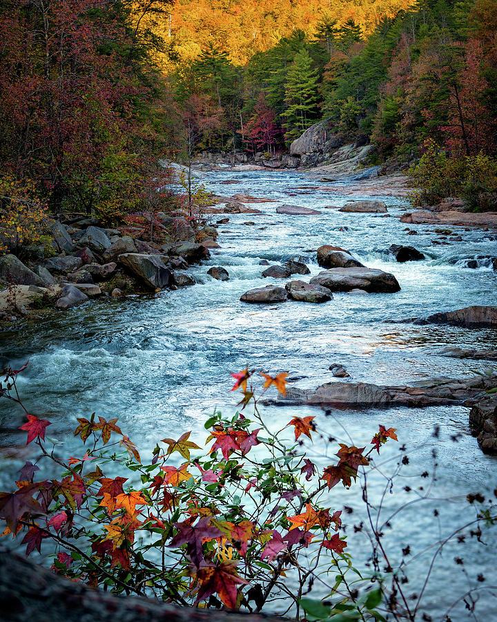 Wilson Photograph - Autumn On Wilson Creek by Mike Koenig