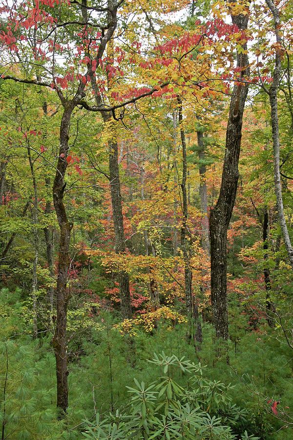 Autumn Palette by Michele Burgess