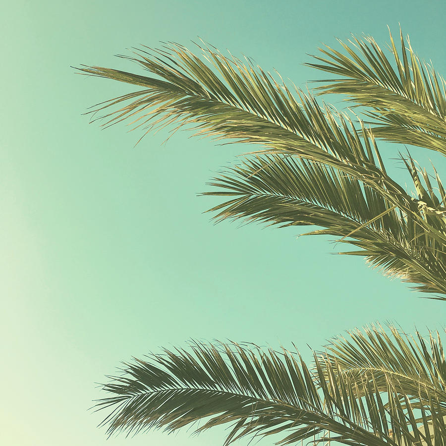 Palm Trees Photograph - Autumn Palms II by Cassia Beck