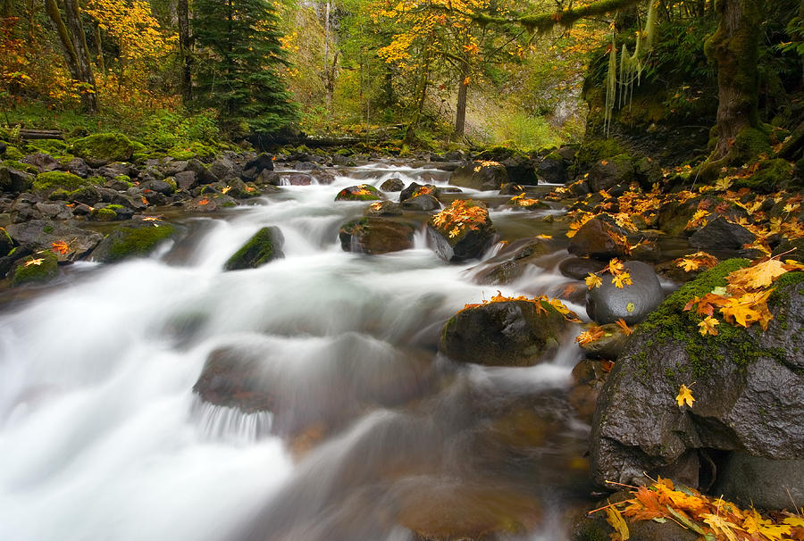Stream Photograph - Autumn Passages by Mike  Dawson