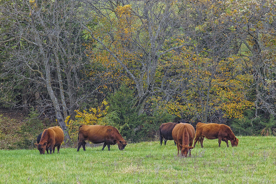 Autumn Pasture by David W Schafer