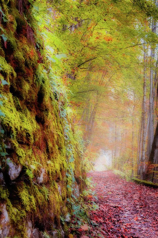 Autumn Path by Geoff Smith