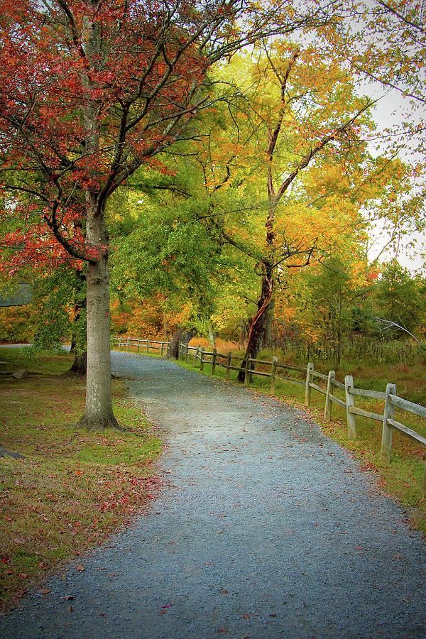 Autumn Path II Photograph by Scott Fracasso