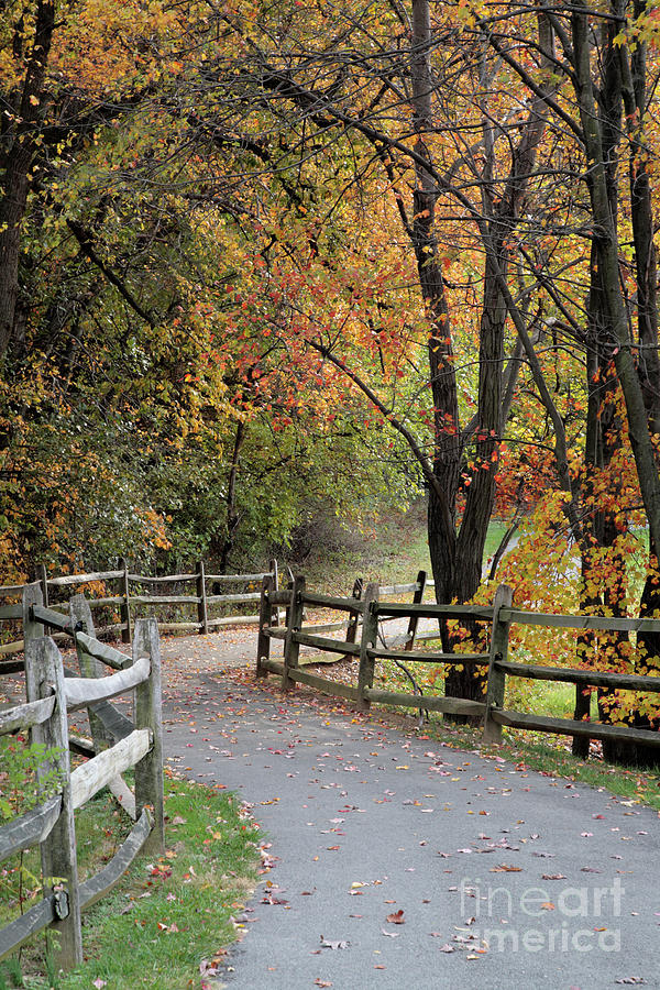 Autumn Photograph - Autumn Path In Park In Maryland by William Kuta