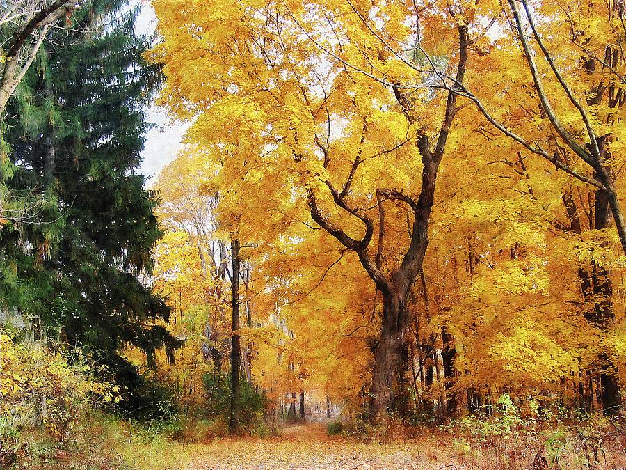 Path Photograph - Autumn Path by Susan Savad