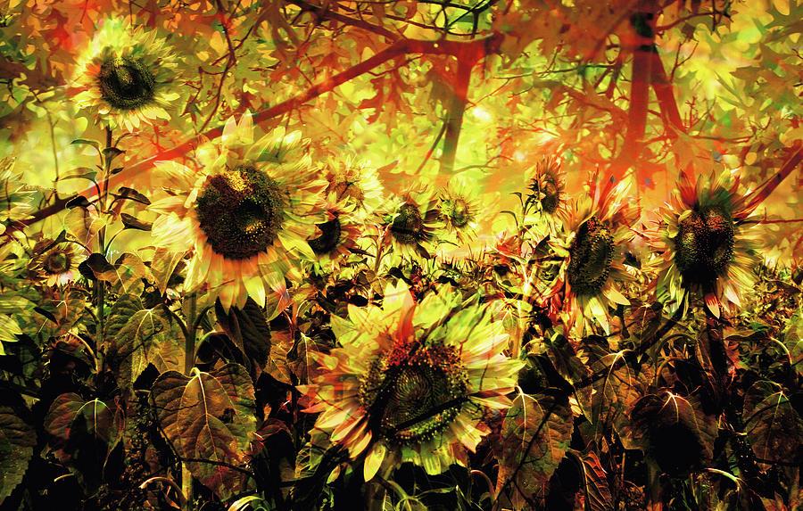 Flowers Photograph - Autumn by Paul Drewry