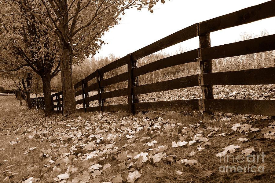 Autumn Photograph - Autumn Perspective by Joe  Ng