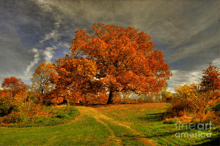 Autumn Photograph - Autumn Picnic On The Hill by Lois Bryan