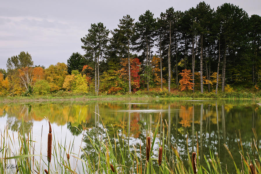 Reflections Photograph - Autumn Pond by Phill Doherty