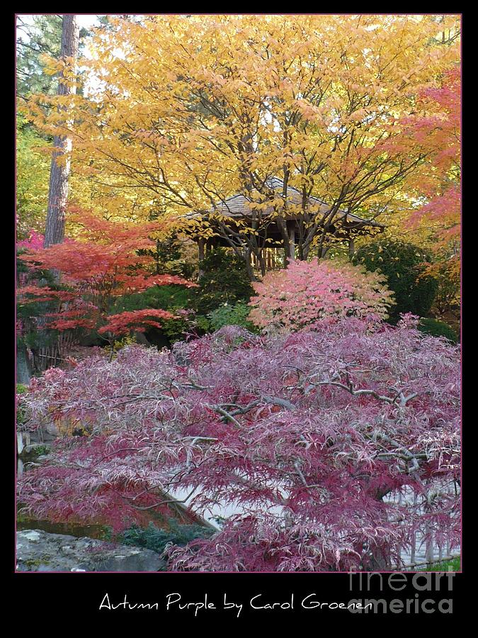 Fall Photograph - Autumn Purple by Carol Groenen