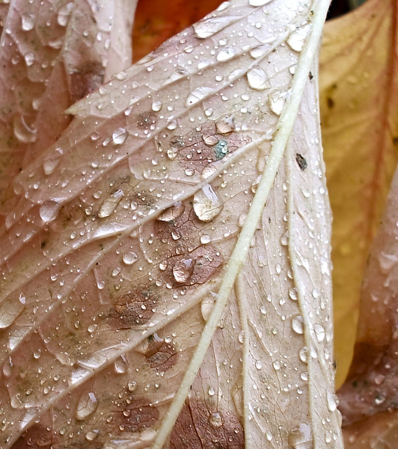 Water Photograph - Autumn Rain by Alpha Pup