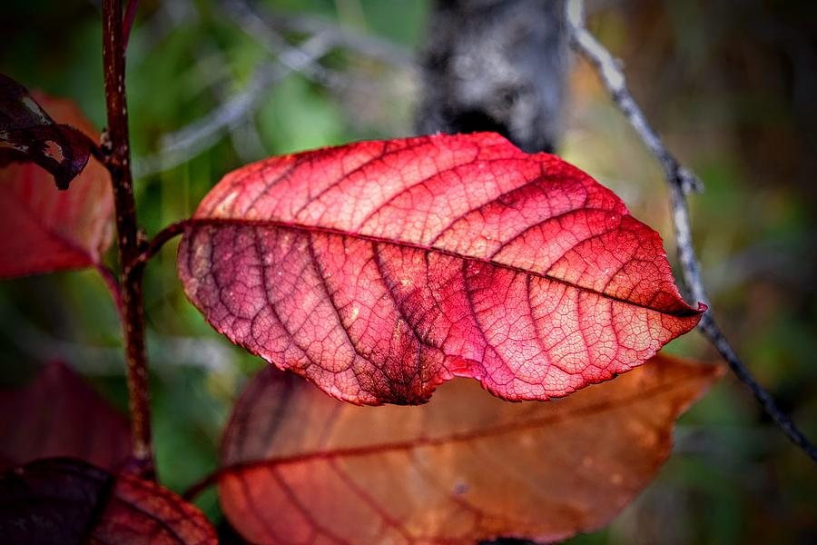 Autumn Red by Michael Brungardt