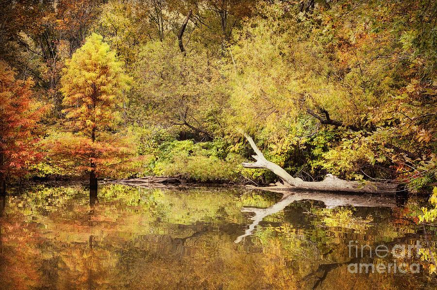 Autumn Photograph - Autumn Reflection by Cheryl Davis