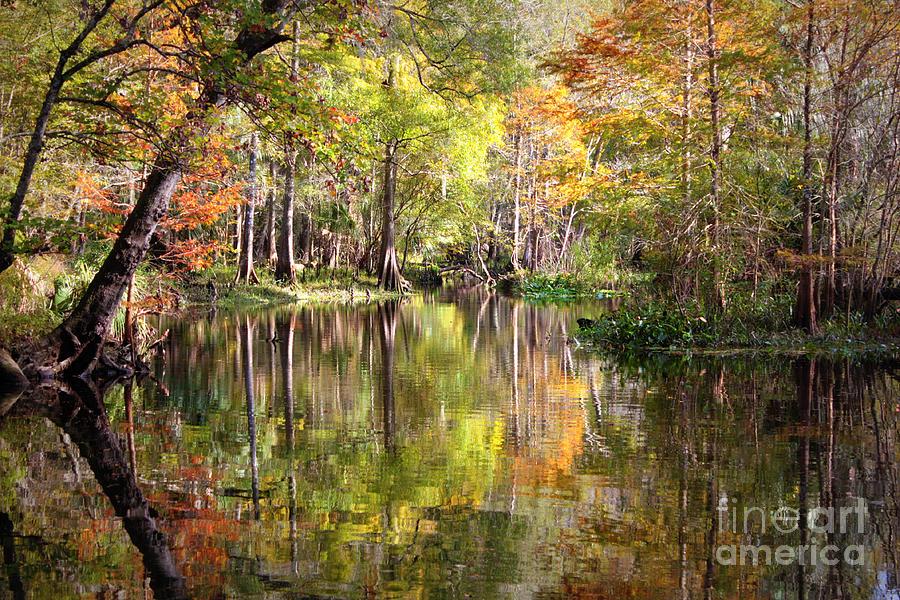 Florida Swamp Photograph - Autumn Reflection On Florida River by Carol Groenen