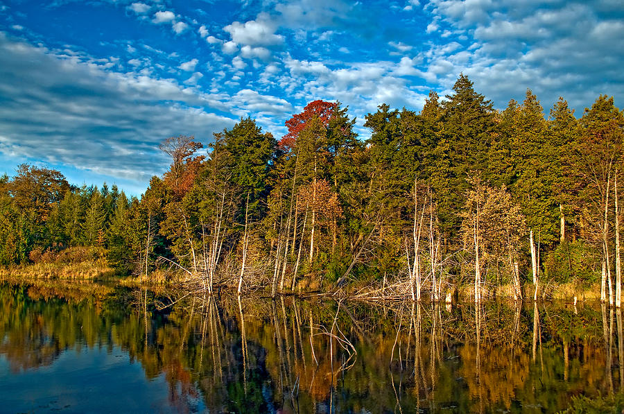 Reflection Photograph - Autumn Reflection by Steve Harrington