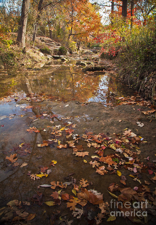 Landscape Photograph - Autumn Reflections by Iris Greenwell