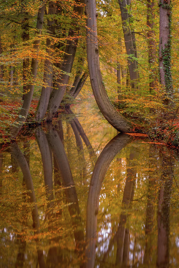 Autumn reflections by Mario Visser
