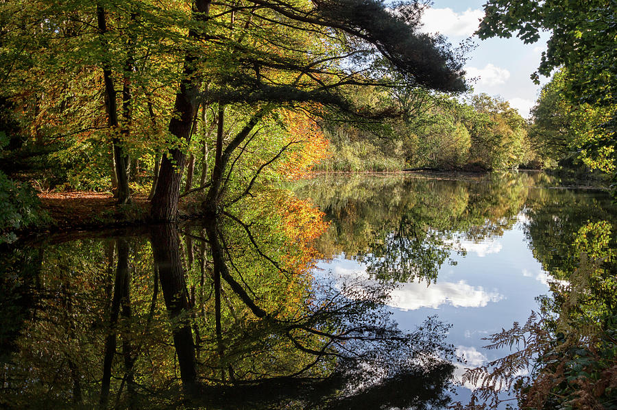 Autumn Photograph - Autumn Reflections by Shirley Mitchell