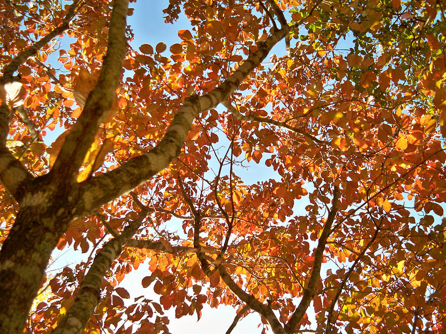 Trees Photograph - Autumn Remebered by Russ Mullen