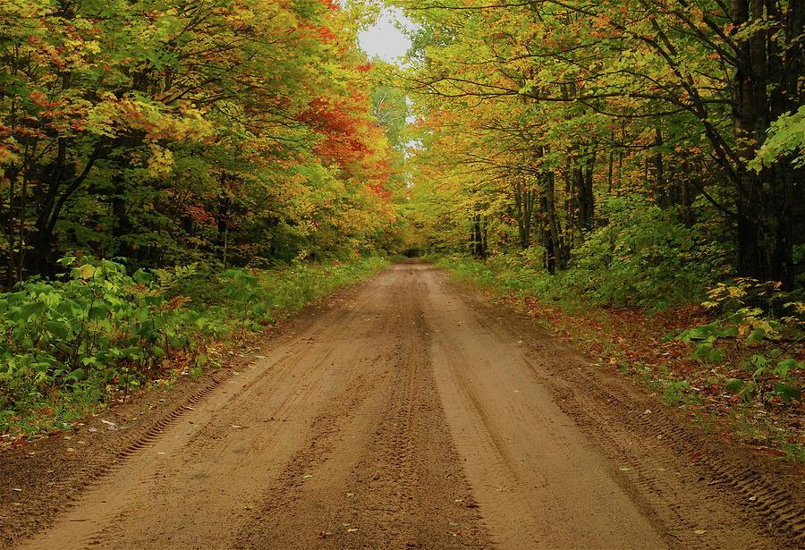 Autumn Photograph - Autumn Road by Michael Peychich