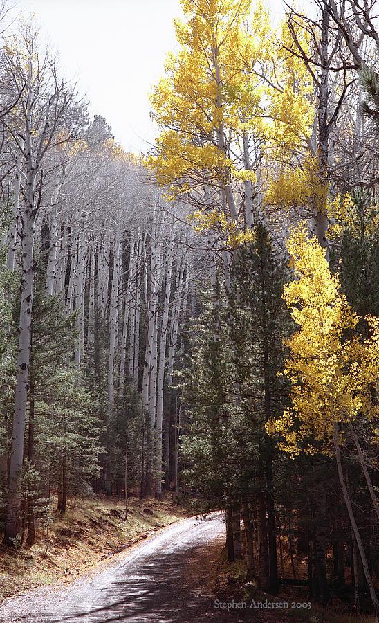 Autumn Road by Stephen Andersen