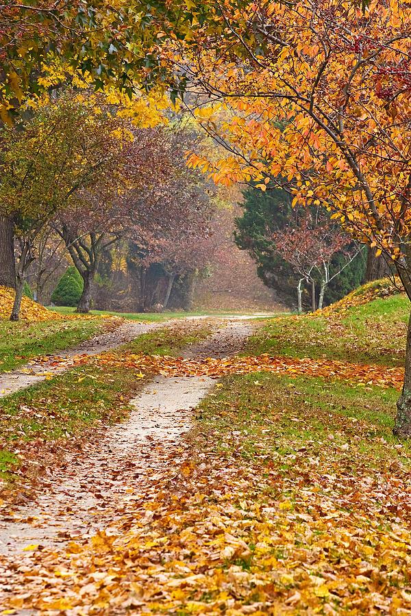 Autumn Photograph - Autumn Road by Stephen Sisk