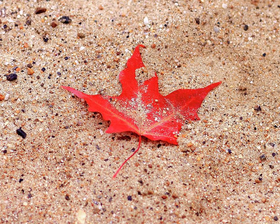 Sand Photograph - Autumn Sand by Brian Pflanz