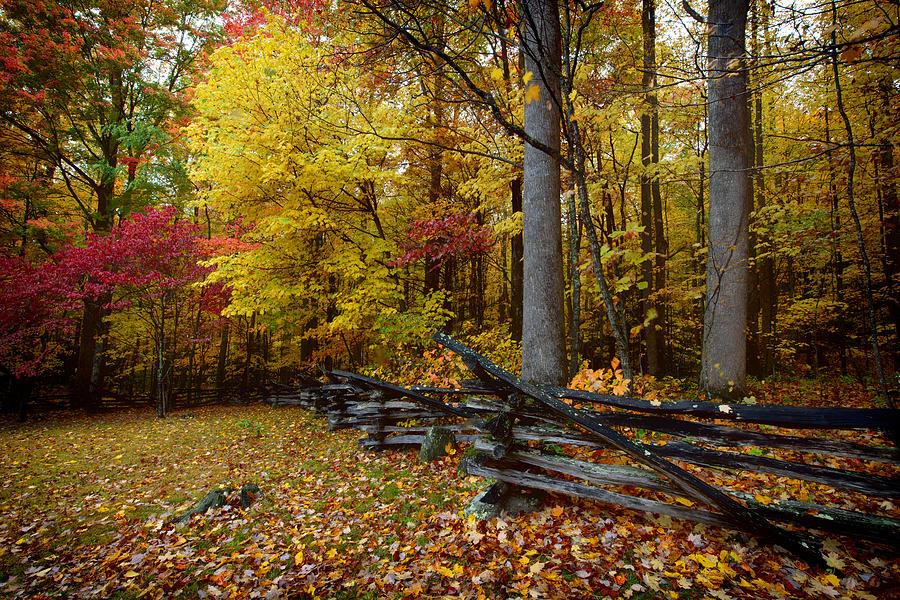 Autumn Scene Photograph