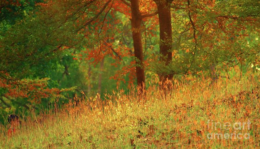 Trees Photograph - Autumn Scene In The Forest by Yali Shi