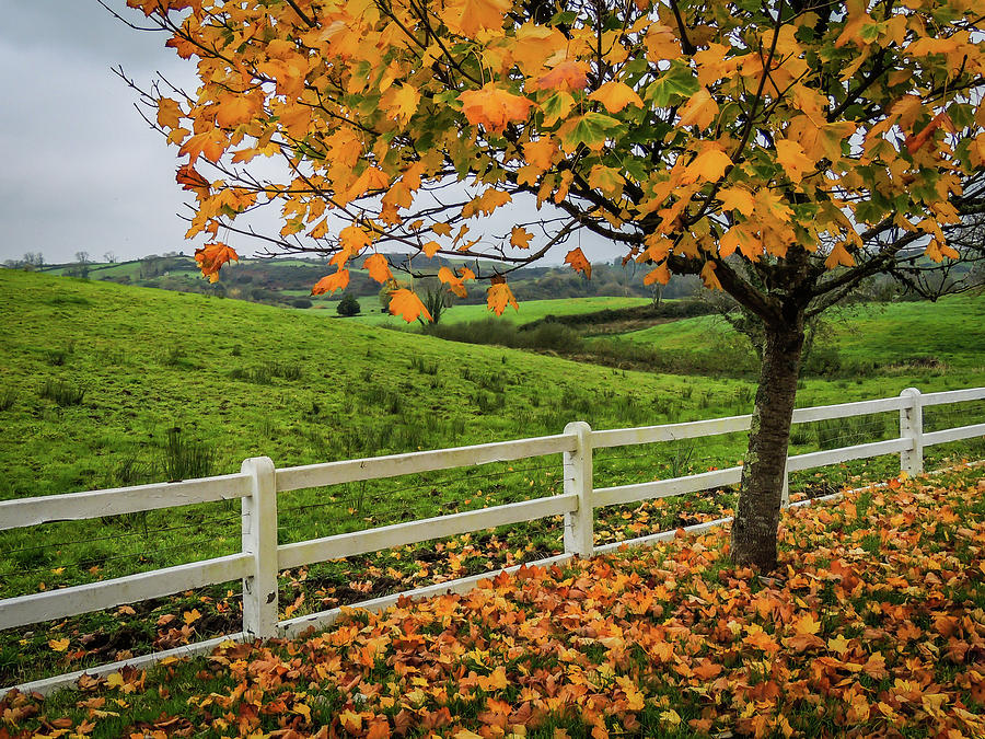 Autumn Photograph - Autumn Scene In The Irish Countryside by James Truett