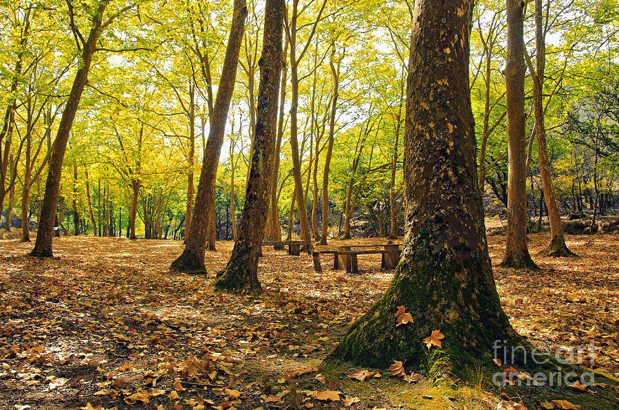 Autumn Photograph - Autumn Scenery by Carlos Caetano