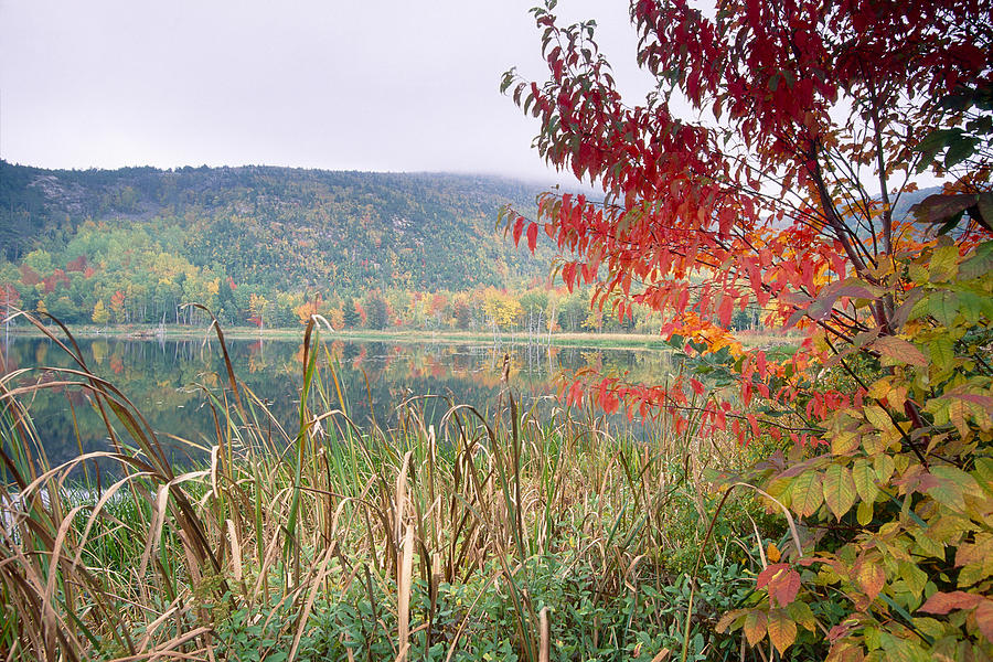 Acadia Photograph - Autumn Scenic Acadia National Park Maine by George Oze