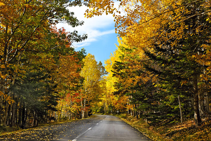 Acadia National Park Photograph - Autumn Scenic Drive by George Oze