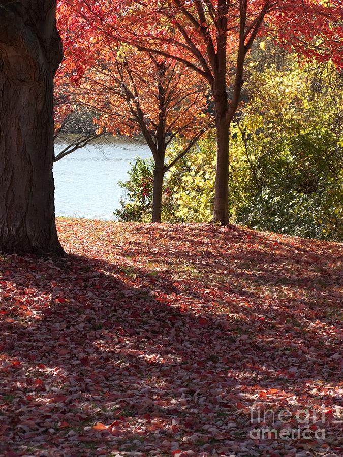 Autumn Shade Photograph