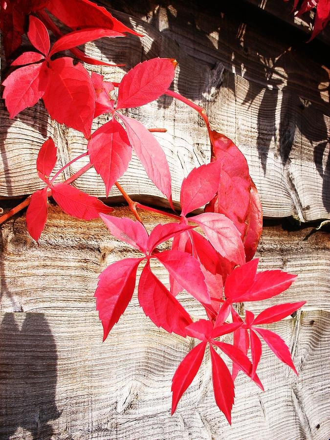 Image Photograph - Autumn Shadows by Lucia Del