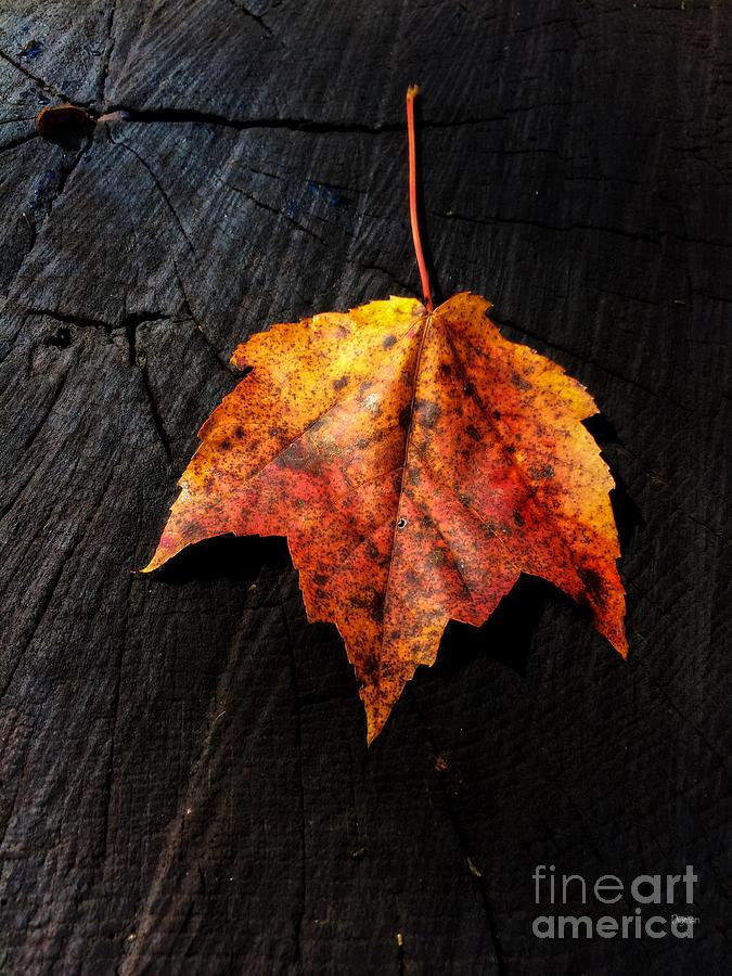 Autumn Photograph - Autumn Singularity  by Steven Digman