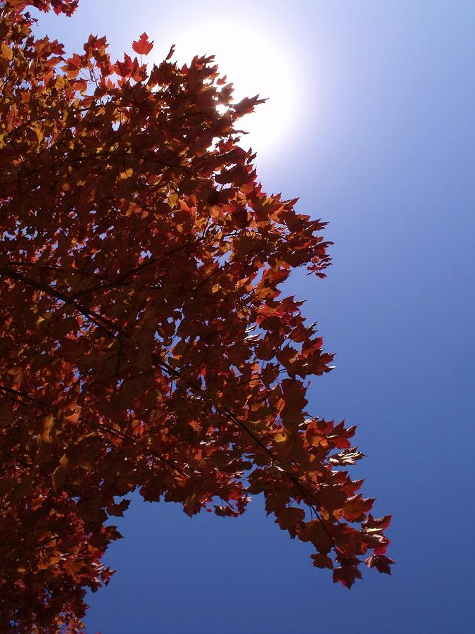 Autumn Photograph - Autumn Sky I by Anna Villarreal Garbis