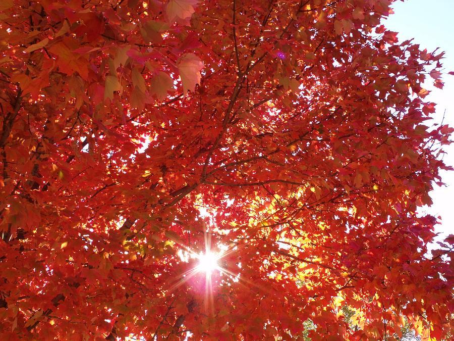 Autumn Photograph - Autumn Sky IIi by Anna Villarreal Garbis