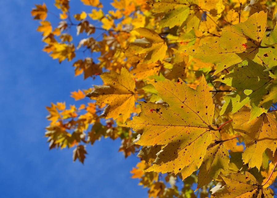 Leaf Photograph - Autumn Sky by JAMART Photography