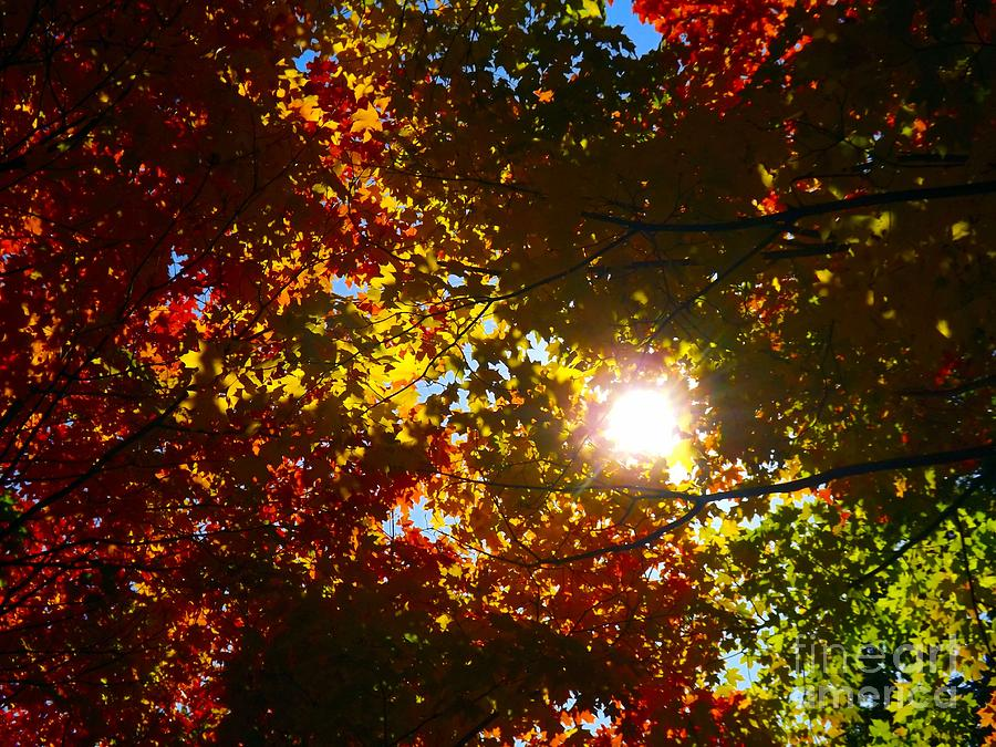 Abstract Photograph - Autumn Sky by Robyn King
