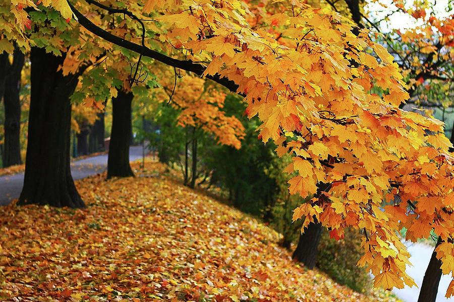 Autumn Smiling by Ellen Henneke